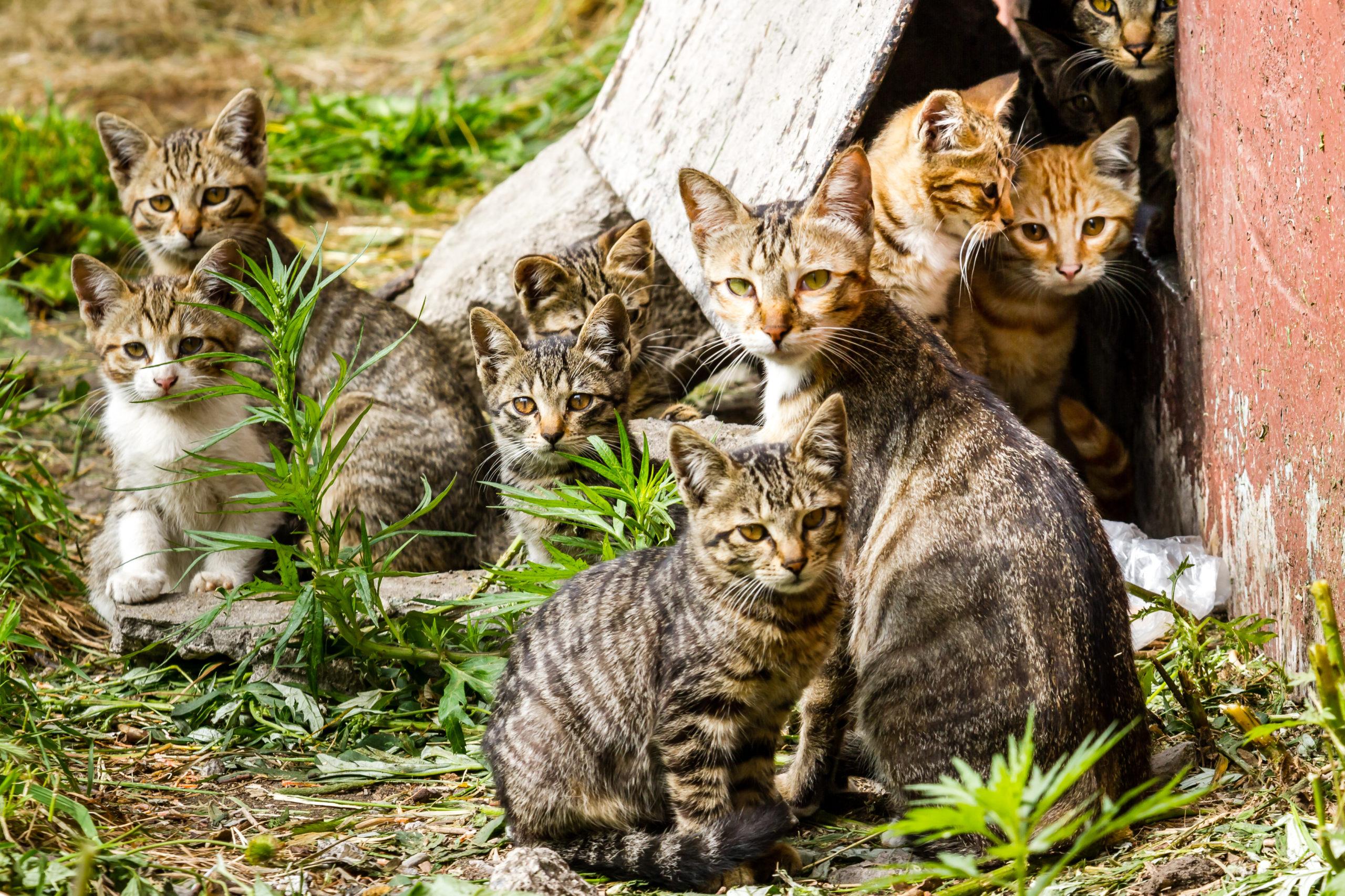 gatos-ação-pb